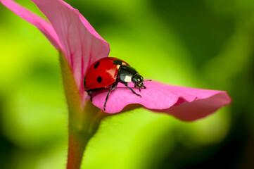 Beautiful ladybug on leaf defocused background