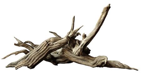 Fototapeta driftwood isolated on white background, old branches obraz