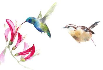 Birds set watercolor illustration isolated on white background hummingbird wren  purple flowers American backyard bird