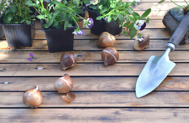 bulbs of flowers on a garden table withflowers potting and shovel