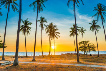 Sunset with palm trees on beach, landscape of palms on sea tropical island