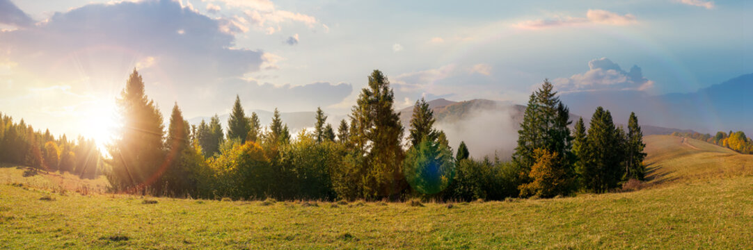 foggy autumn landscape panorama at sunset. spruce trees on the meadow in evening light. mountain behind the morning mist. cloud inversion natural phenomenon observed from the side
