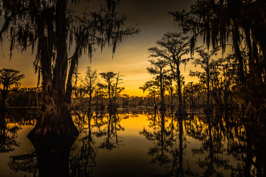 Sunrise with cypress trees in the swamp of the Caddo Lake State Park, Texas