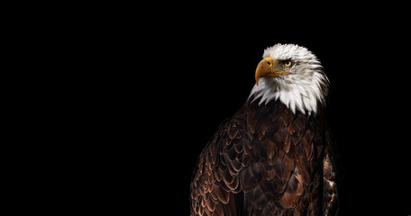 Portrait of Bald eagle on black background (Haliaeetus leucocephalus), Wild proud bird, Symbol of America.