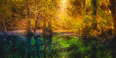 Forest trees reflected in the calm water of the river in autumn. Wild colorful nature.