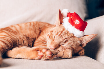 Cute ginger cat in xmas hat