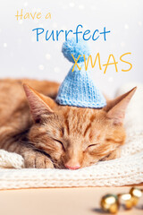 Have a Purrfect Xmas wth cat in knitted hat
