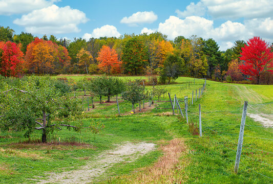 Apple orchard landscape against beautiful autumn foliage in New England. Blue sky and white clouds.