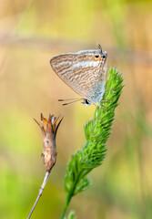 Photo sur Plexiglas Papillon Macro shots, Beautiful nature scene. Closeup beautiful butterfly sitting on the flower in a summer garden.