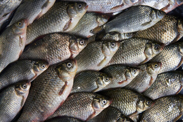Fresh river fish background, top view