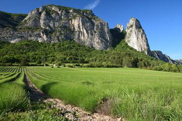 Champ de lavande de Saou dominé par les Aiguilles (alt 793 m) et la Tour (alt 663 m)