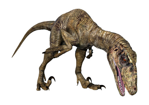 3D Rendering Dinosaur Deinonychus on White