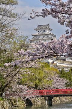 世界遺産姫路城と桜