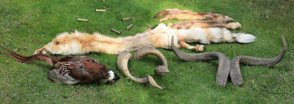 poaching prey,killing animals,hunting trophies