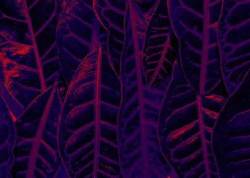 Ultraviolet forest - Leaves under purple light
