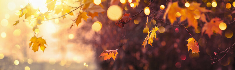 Photo sur Aluminium Bordeaux Fall Scene. Bokeh effect. Trees and Leaves in Sunlight Rays