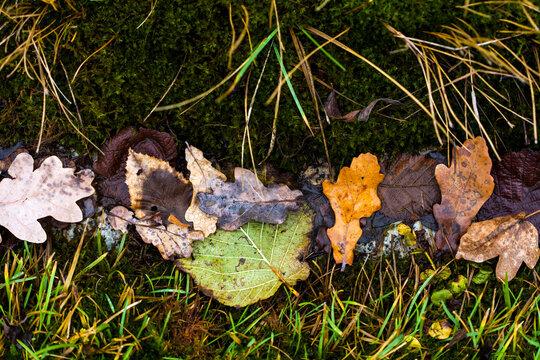Dry Leaves in Grass Gutter