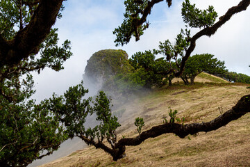Posto Florestal Fanal, Madeira