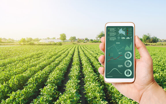 Farmer's holds a smartphone on a background of a field with a potato plantation. Scientific research. Hi-tech technology, innovation. Agroindustry and agribusiness. European organic farming.