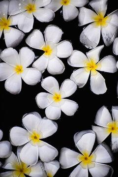 White Frangipani Flowers In Water