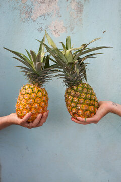 Two pineapples in two hands
