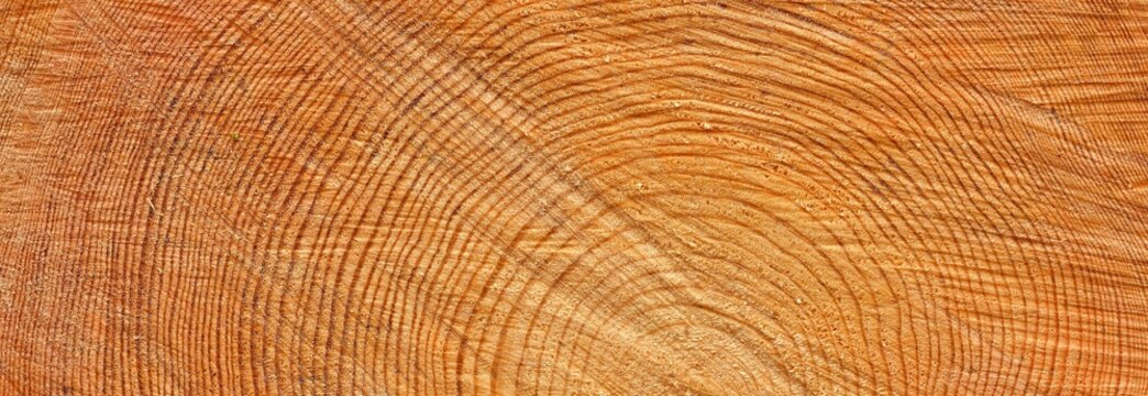Freshly made firewood in the forest, close-up.Natural pattern, texture, background, graphic resource. Environmental damage, ecology, nature, wood, deforestation, lumber industry, alternative energy