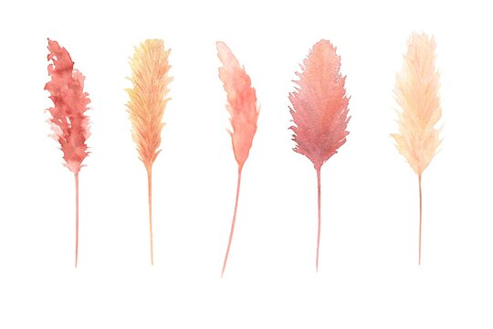 Watercolor bohemian dried leaves set isolated on white background. Warm colors pampas grass, boho wedding theme set. Hand painted. Perfect for autumn season wedding invitation.