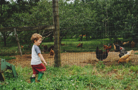 Boy and Chickens on the Farm