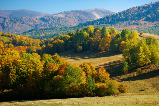 trees in colorful foliage on the hills. rolling countryside scenery in autumnal season. wonderful sunny weather on a sunny day in carpathian mountain landscape