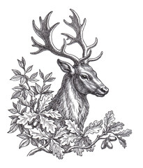 Wild deer head , hand drawn illustration in the engraving style.