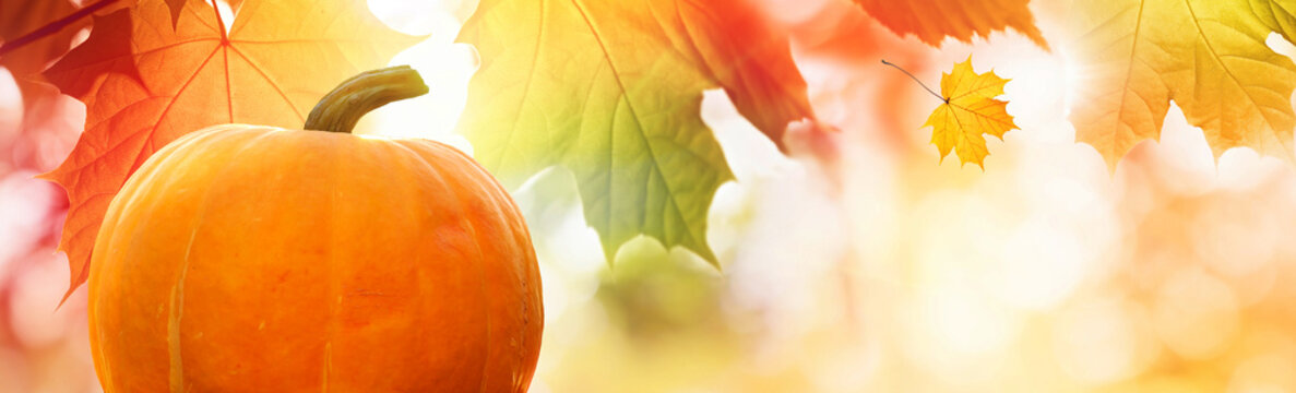 Thanksgiving pumpkin on autumn leaves background