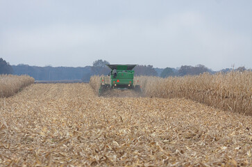 Tractor Harvests Corn in a Field