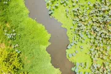 pond of lotus farm