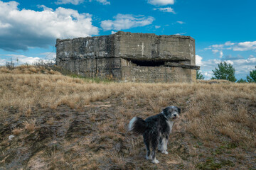 Dog in front of a concrete bunker at former military training area Jueterbog in late summer