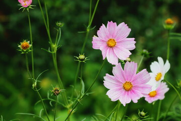 Obraz Kwiatki - fototapety do salonu