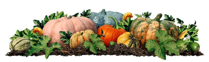 Autumn Pumpkin Border Design