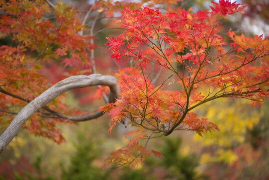 赤く色づいた紅葉