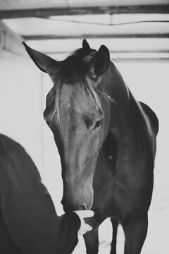 Man touching horse muzzle in black and white