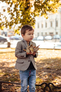 Little boy wearing stylish casual clothes walks in a park. Autumn time, yellow trees