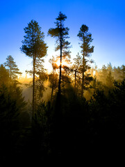 Sunbeams Sunrays Streaming Through Pine Trees Forest Misty Fog Morning Warmth