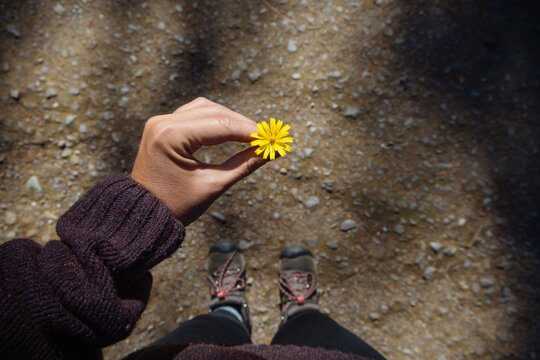 Holding a wild flower she found during a hike