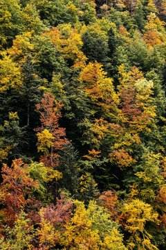 Trees in a forest at fall