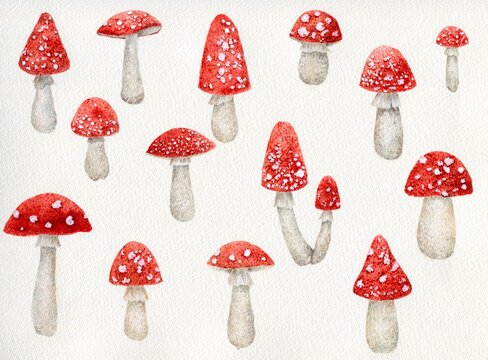 Watercolor paintings of fly agaric