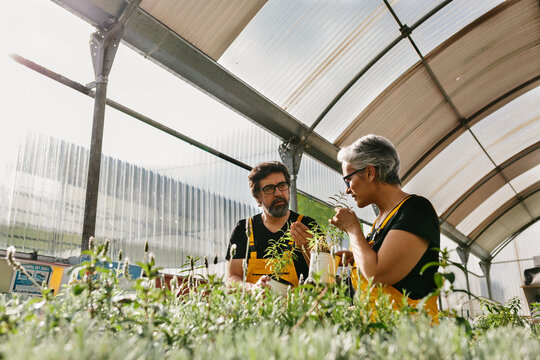 Mid adult couple working in a greenhouse