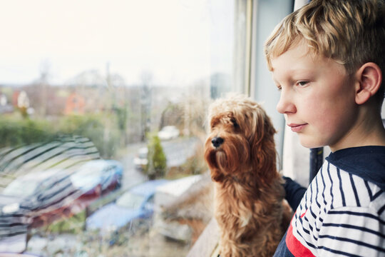 Boy and his pet dog looking out of the window