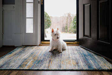 Cute white dog sitting in front of a front door