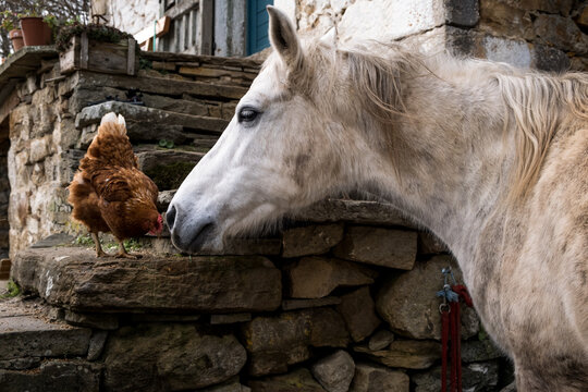Who are you? says the horse. And who are you? says the chicken