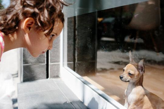 Kid looking at a chihuahua dog behind a window