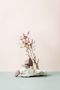 Still life with dried flower and stones