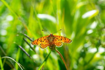 Fond de hotte en verre imprimé Papillon Macro shots, Beautiful nature scene. Closeup beautiful butterfly sitting on the flower in a summer garden.